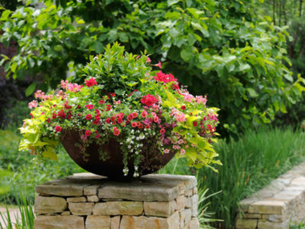Container gardening tips ideas flower plant for How to landscape backyard