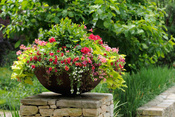 Top 10 Container Gardening Tips