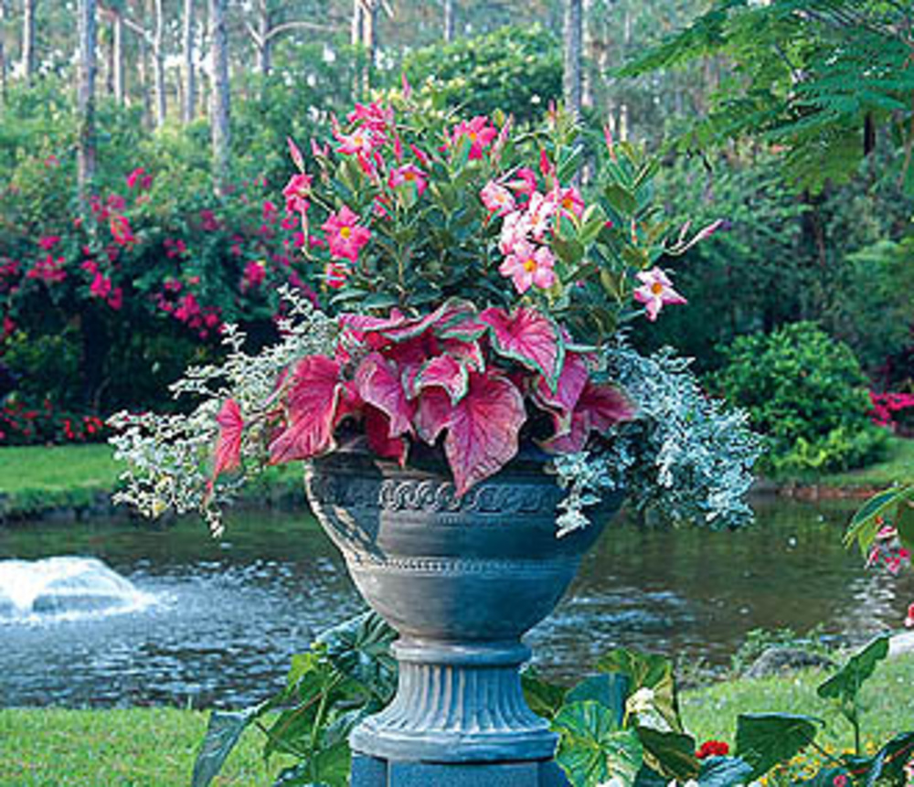 Container gardening tips ideas flower plant container gardening denbok landscaping design - Container gardening ...